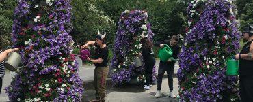Vikingowie podlewają kwiatki!
